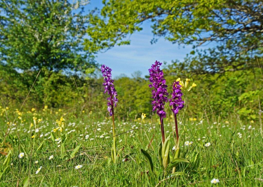 spring meadow audio atmosphere