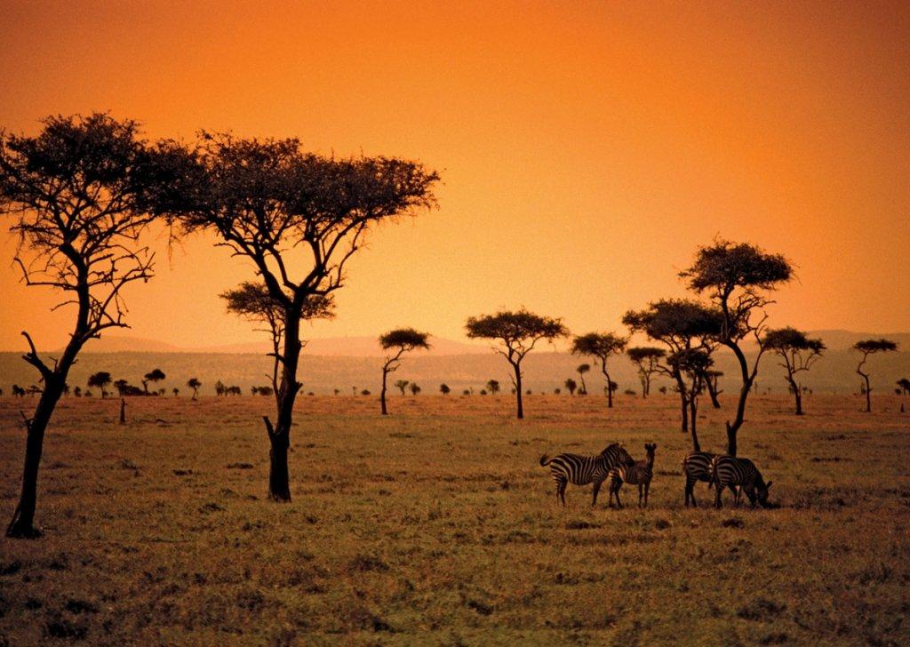 Verdant African Grasslands with Animal Calls and Birdsong audio ...