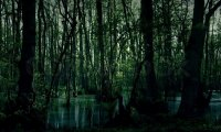 Swamp ambiance